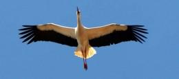 """Billedet af den flyvende stork er taget i en lille by i Tyskland ved navnet Bergenhusen, og er kendt som en """"storkeby""""."""