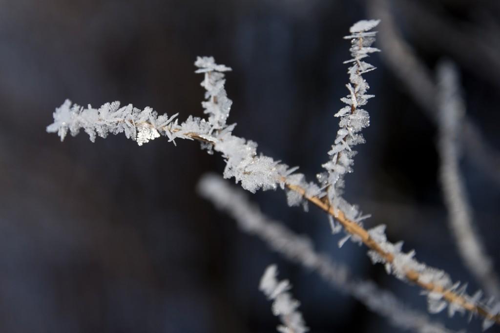 Frost i naturen